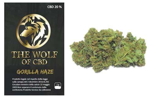 gorilla-haze-full