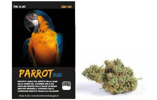 parrot-bud-bronze