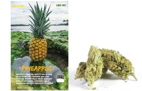 pineapple-erba-bronze